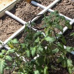 How to Build a Square Foot Gardening Grid that Won't Rot