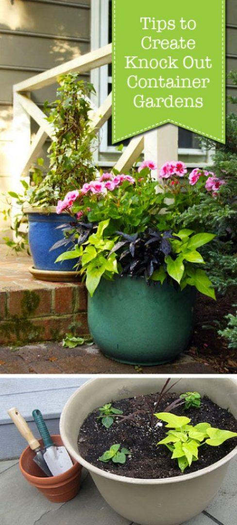 Tips to Create Knock Out Container Gardens | Pretty Handy Girl