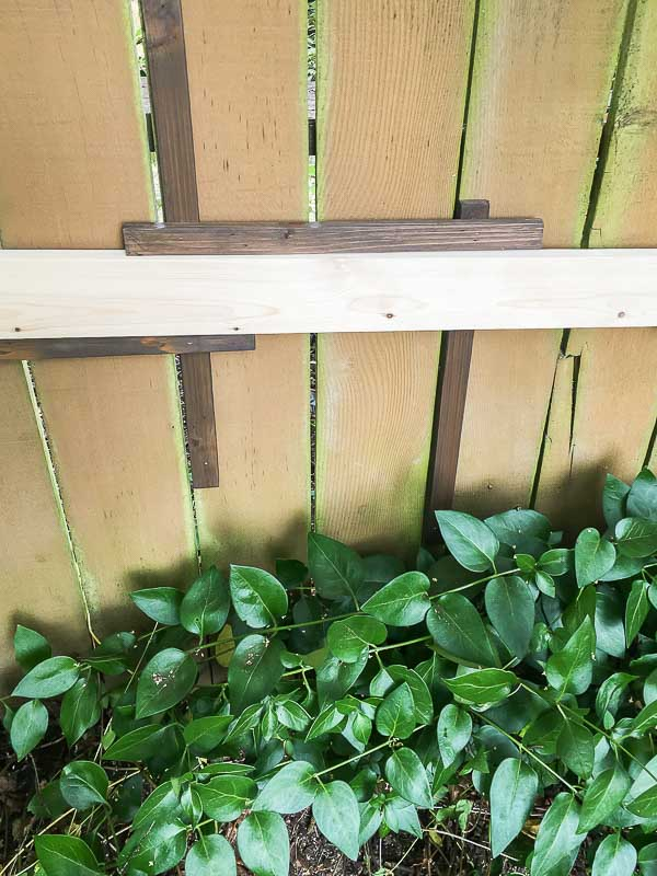 Use a spacer between the slats of your fence trellis so the horizontal rows will be evenly spaced.