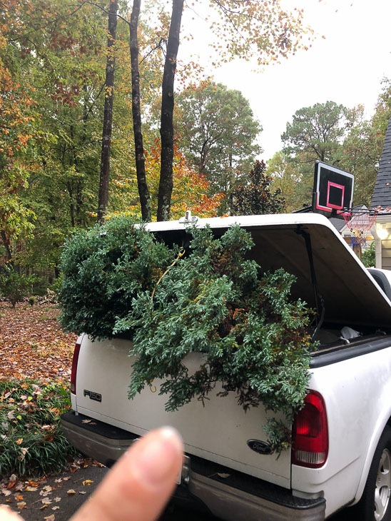 spruce trees loaded into back of truck