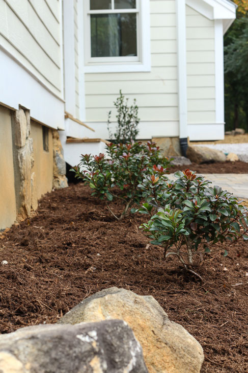 new foundation bushes