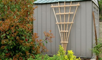 Trellis on shed