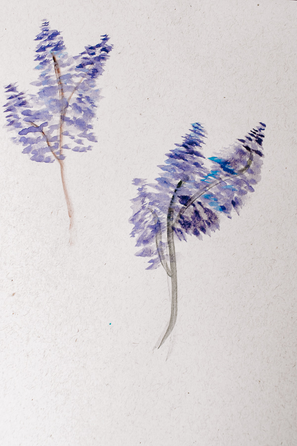 Watercolor painted lavender