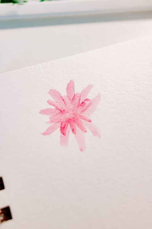 a pink flower being painted with watercolors