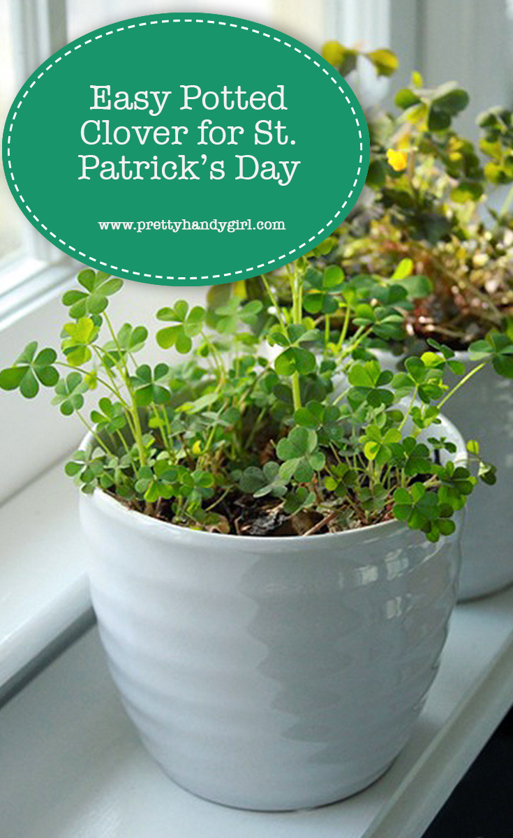 Easy Potted Clover for St. Patrick's Day | Pretty Handy Girl