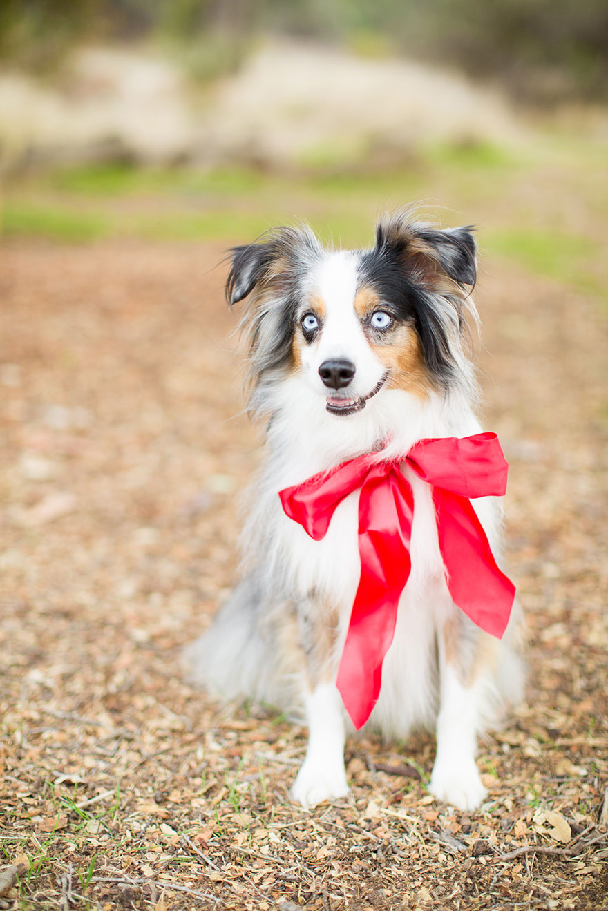 pretty-pure-christmas-puppy2