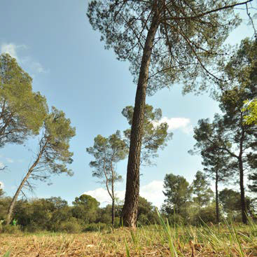 Debroussaillement élaguer les arbres
