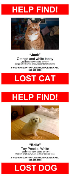 lost pet poster template