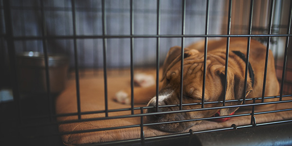 Crate Training Your Puppy at Night