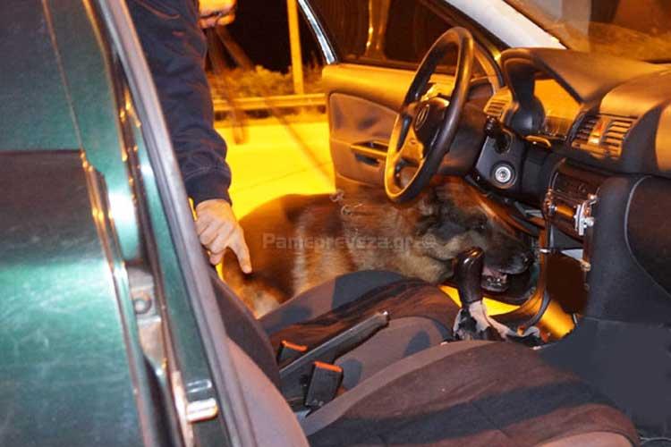 Πρέβεζα: Ο σκύλος μύρισε κοκαΐνη και ηρωίνη_5e067ea240fd1.jpeg