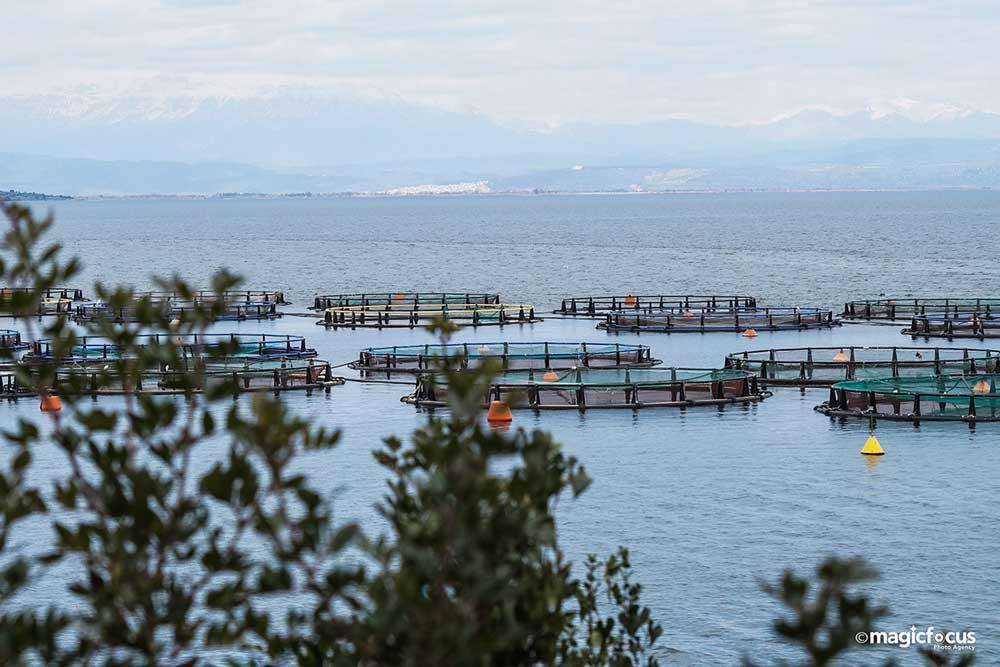 Πρέβεζα: Έκλεβε ψάρια από ιχθυοκαλλιέργεια στον Αμβρακικό