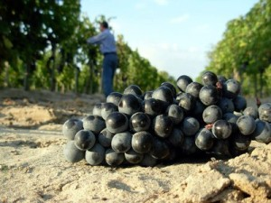 vini sabbia bosco eliceo