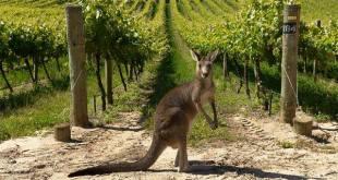 Vini Australiani
