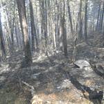 Ugašen požar na Crnom Vrhu