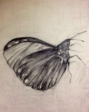 Lupus 42x29,7 crtež olovkom Zeichnung, Bleistifft