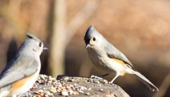 Semínka a dva ptáci