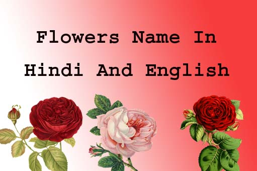 Flowers name in hindi