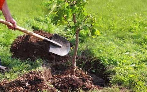 """Modica, si schiera per la natura e partecipa ad """"Alberi per il futuro"""": domani saranno piantate nella città trenta querce"""