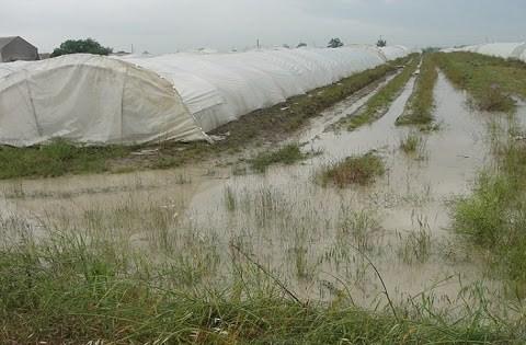 Piana di Catania, vento e gelate provocano danni alle colture