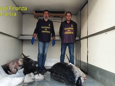 Cronaca Catania, guardia di finanza sequestra due tonni rossi