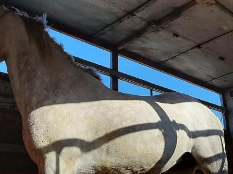 Trasportava cavallo a Grammichele
