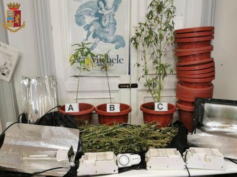 Enna denunciato giovane coltivazione cannabis