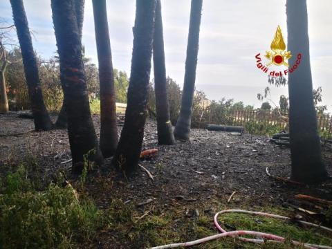 Morte terribile per un povero cane legato in un albero avvolto dalle fiamme. In corso di accertamento le cause del rogo.
