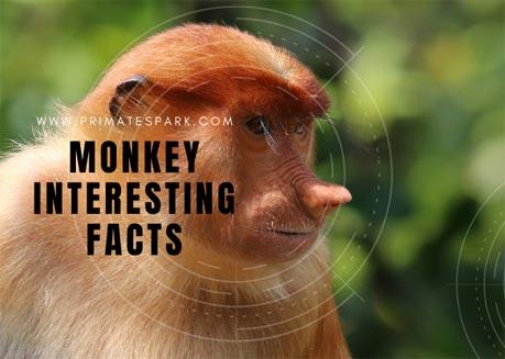monkey interesting facts