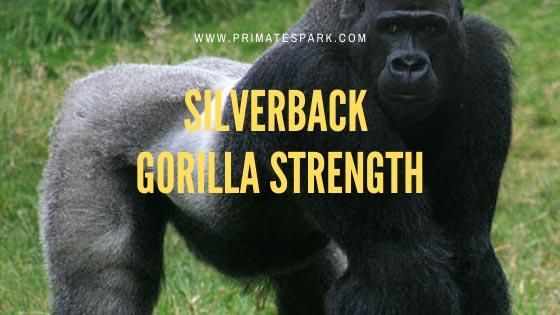 silverback-gorilla-strength