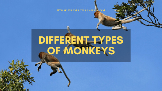 different types of monkeys