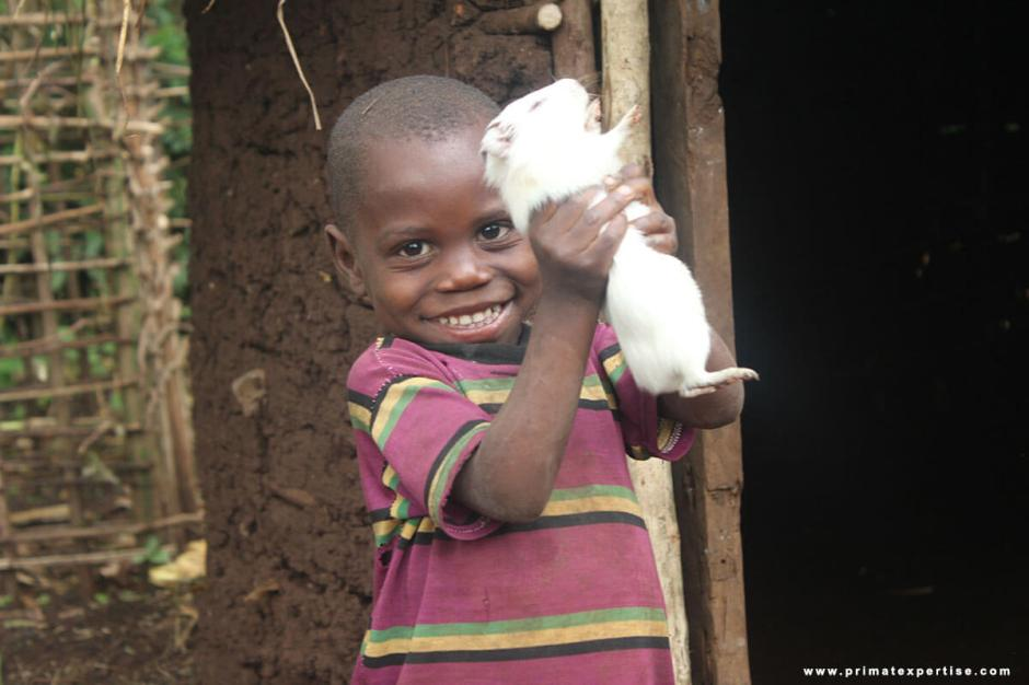 Guinea pigs breeding associated with vegetable gardens for vulnerable populations living around Kahuzi Biega National Park