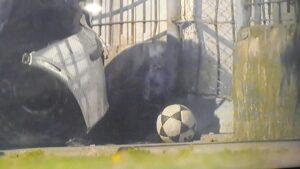 La pelota con la que jugaba Máximo