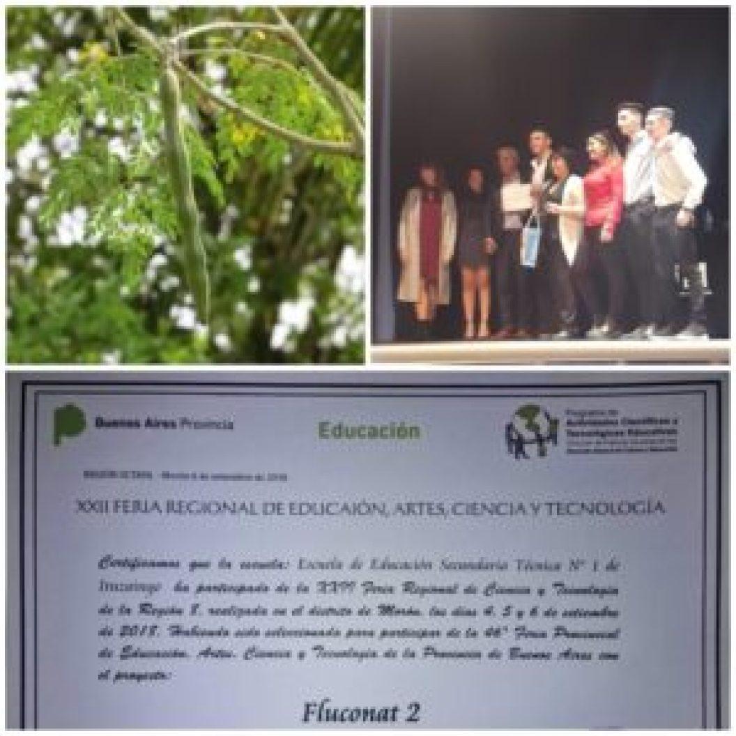 """El árbol de Moringa, de donde se obtiene la semilla que el grupo de alumnos """"transformó"""" en purificador de agua y por el cual fueron elegidos para representar a la provincia de Buenos Aires en un certámen nacional"""