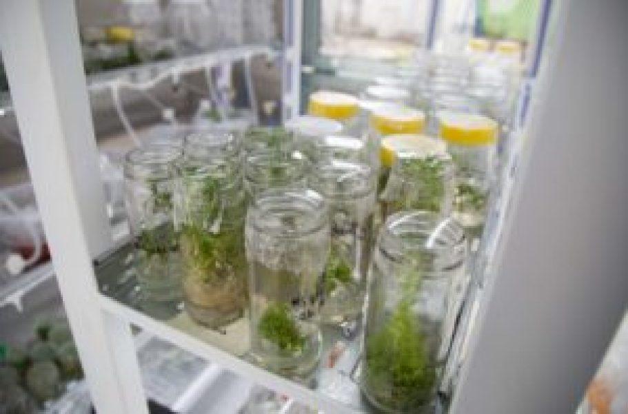 En 2020 el laboratorio se abrirá a los estudiantes para que puedan desarrollar allí sus tesis de grado