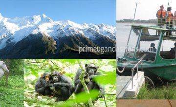 10 Days Uganda Gorilla & Wildlife Group Safari