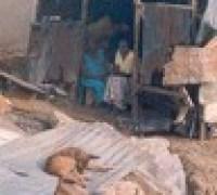 kampala slum