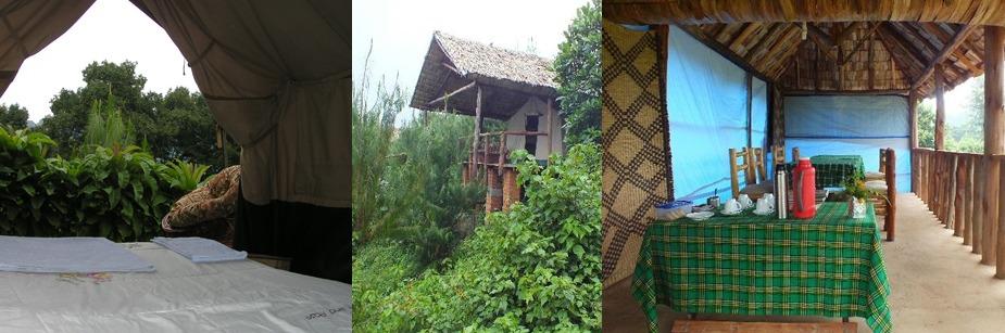 Broadbill Forest Camp- accommodation in uganda