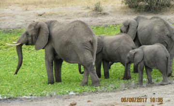 6 Days Wildlife Safari in Tanzania