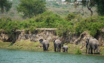 Wildlife Uganda Tour - 4 Days