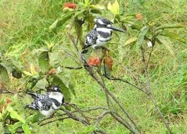 BIRDS AT ENTEBBE BOTANICAL GARDENS