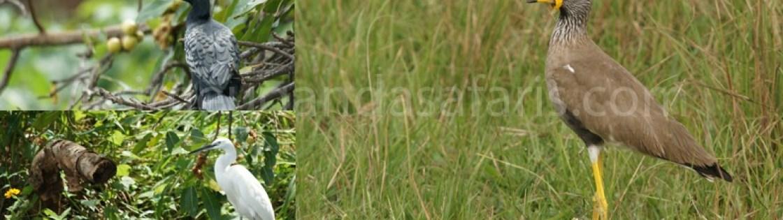 birding-in bwindi