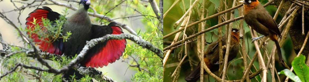 birds-in-nyungwe-national-park-rwanda-tour