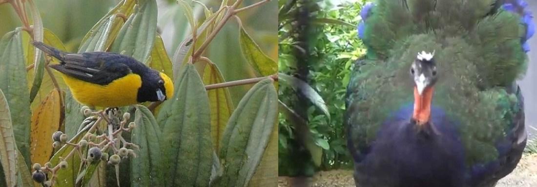 birds-kahuzi-beiga-np