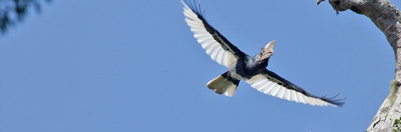 bwindi-birding-safari