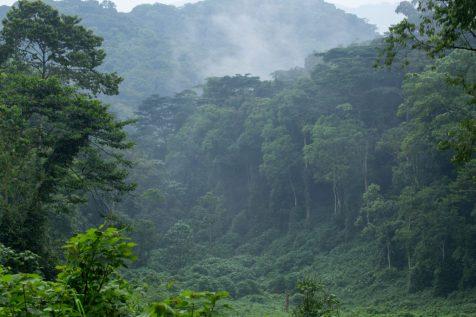 bwindi forest , uganda gorilla safaris