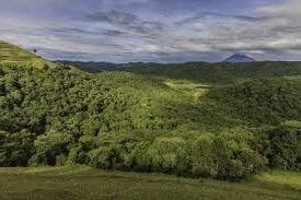 echuya forest-image