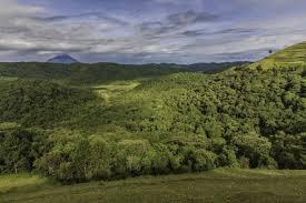echuya forest