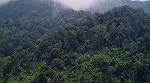 forests in rwanda
