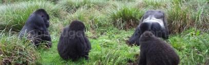 gorilla-safaris-in-rwanda