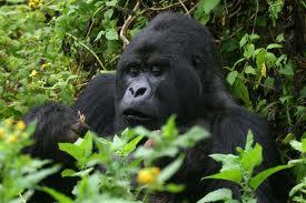 goria safaris in Uganda